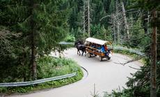 Wóz w drodze na Palenicę Białczańską