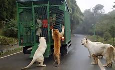 Zoo Lehe Ledu Wildlife