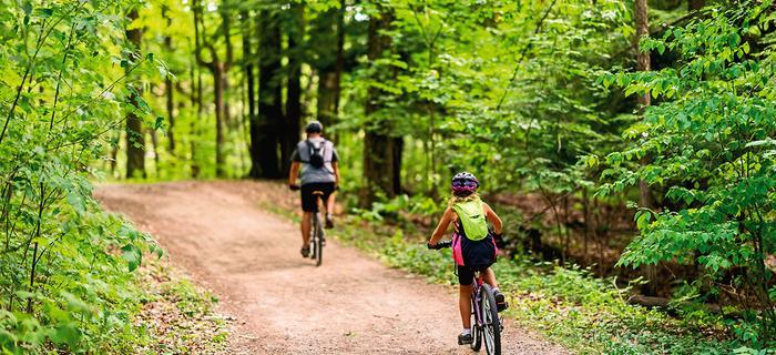 Szlak rowerowy w lesie