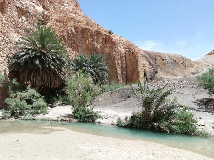 Oaza Chebika u podnóża gór Atlas
