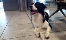 Pies Zen na krakowskim lotnisku Balice