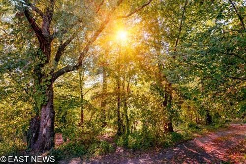 Las na Ukrainie - zdjęcie ilustracyjne