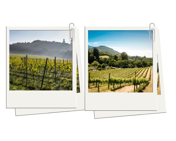 1. Plantacje winorośli w Małopolsce i Zielonej Górze – jak w słonecznej Toskanii