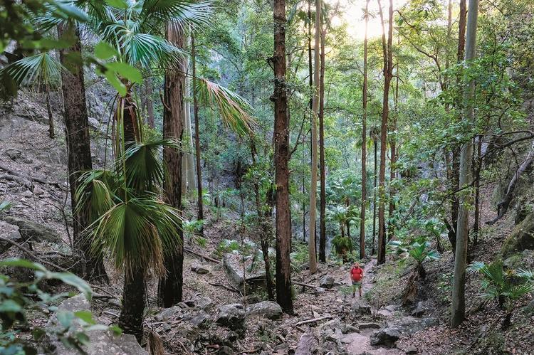 Wzdłuż wąwozu Carnarvon prowadzi 25 km tras spacerowych. To niepopularne miejsce w Queenslandzie przypomina sławne Góry Błękitne