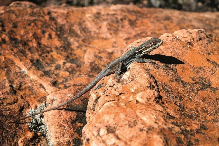 Większość zwierząt w Outbacku jest drobna. W tym klimacie trudno przeżyć