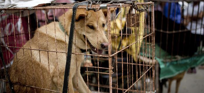 Chiny, Yulin. Psy w klatkach na lokalnym targowisku.