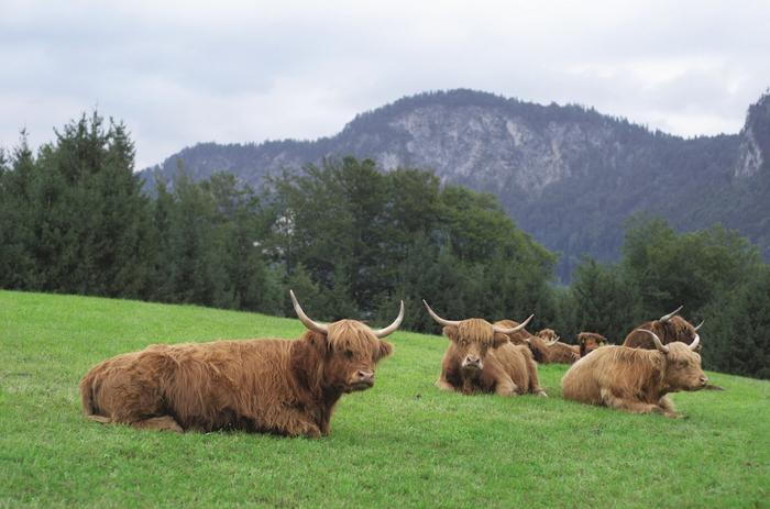 Tyrol. Farma Lindhof w Thiersee