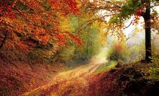 Pierwszy dzień jesieni 2021. Kiedy zaczyna się astronomiczna i kalendarzowa jesień?