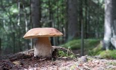 Gdzie na grzyby? Znamy najlepsze miejsca na grzybobranie w całej Polsce