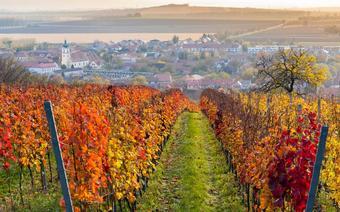 Na dobre wino do Czech